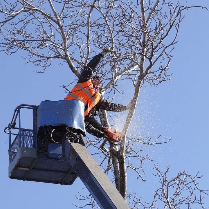 Pearland tree limb removal