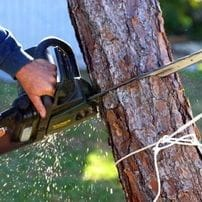 Pearland tx tree removal services