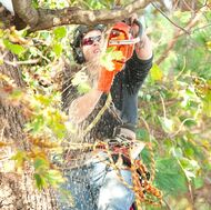 Professional tree trimming pearland tx