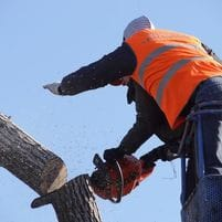 Tree removal pearland tx