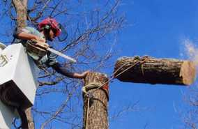 Tree removal services pearland tx