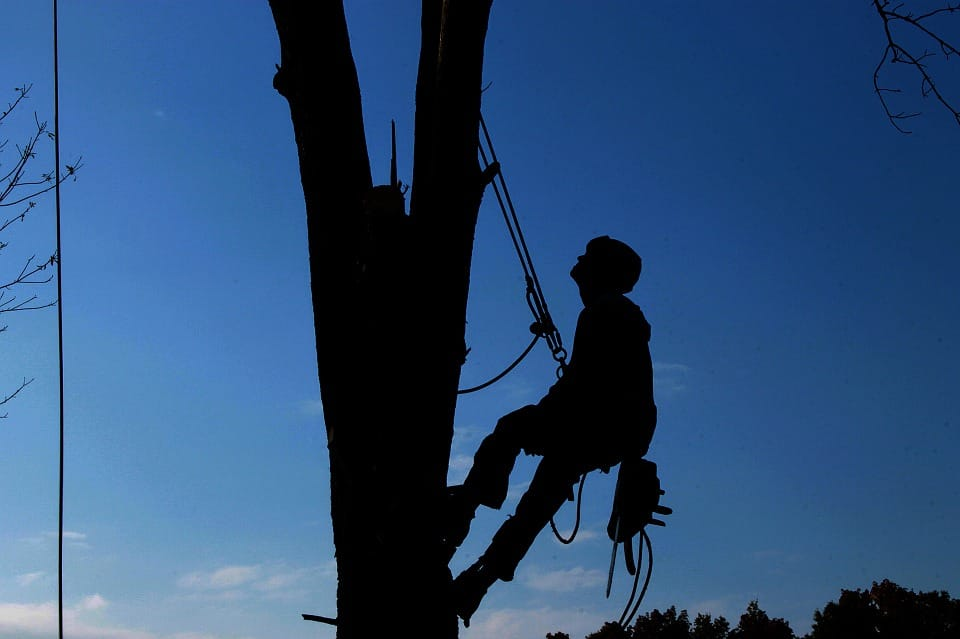 Tree removal experts pearland tx
